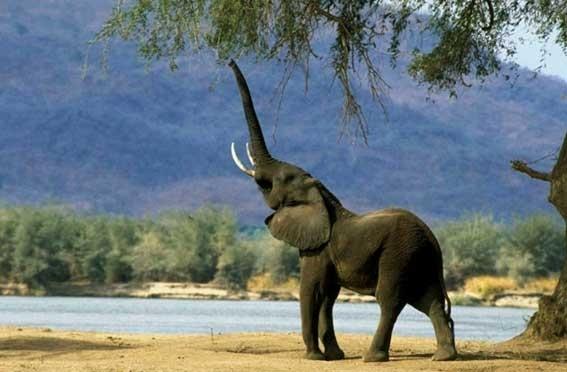 Самое большое животное в мире  Самое Маленькое Животное в Мире