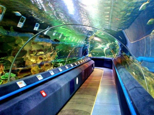океанариум в санкт петербурге фото